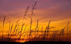Sunset sky grass