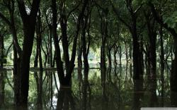 Swamp Forest Hd Desktop Wallpaper Widescreen High Definition