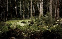 HD Wallpaper   Background ID:283298. 2560x1600 Earth Swamp