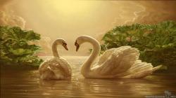 Beautiful Love Swan Desktop Wallpaper