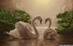 Loving Swan Pair Desktop Wallpaper