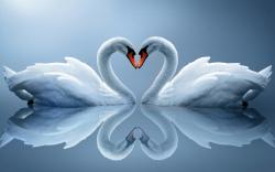 Swan- Photo#07
