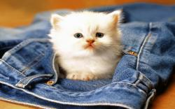 Sweet cat sitting in jeans