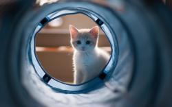 Sweet Kitten Home