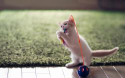 Sweet Kitten Toy Fun Photo
