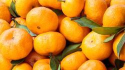 Desktop wallpapers Tangerines.