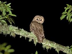 Due to the fact that tawny owls are relatively small birds (particularly in comparison to other birds of prey), the tawny owl has a number of natural ...