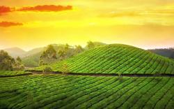 Teagarden sunset