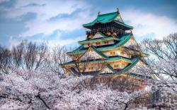 Temple Cherry Blossom