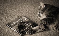 Secret Life of Cats Google Skin