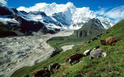 Fonds d'écran Tibet PC et Tablettes (iPad, etc...)