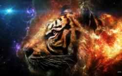 Tiger - animals Wallpaper