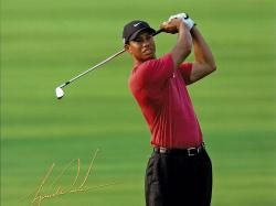 tiger woods male celebrities 176596