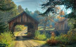 Tiny Bridge Forest Road