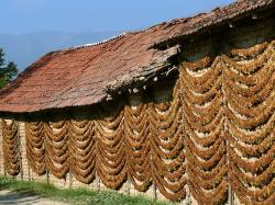 File:Tobacco Drying, Kostinci.jpg