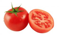 Food Tomato Wallpaper #303641 - Resolution 1920x1200 px