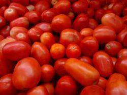 File:Roma or Bangalore Tomatoes (Indian hybrid).jpg