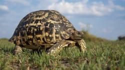 ... Tortoise Wallpaper