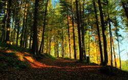 Forest Trail Wallpaper 23385
