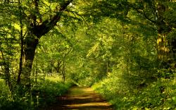 Forest Trail Wallpaper 23458