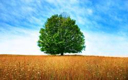 ... Tree Wallpaper · Tree Wallpaper