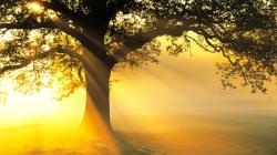 From One Tree to Another: Zacchaeus and Jesus   Cornerstone Worship Center