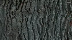 ... Tree bark wallpaper 1366x768 ...