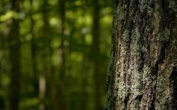 ... Tree bark 1680x1050 wallpaper ...