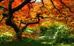 Autumn Leaves Forest Trees Wallpaper #95400 - Resolution 1920x1200 px