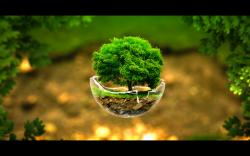 Tree in sphere