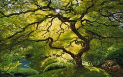 Tree leaf canopy