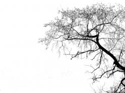 Tree Silhouette by Simmo1024 / © Some rights reserved.
