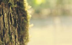 Nature Bark Tree Trunk Bokeh HD Wallpaper