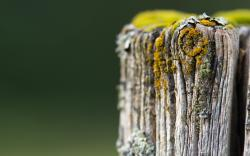 Tree Trunk Moss Nature