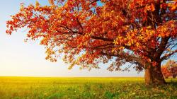 Tree Wallpapers and Backgrounds 03