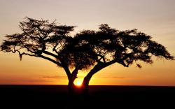 Sunset Tree Wallpaper