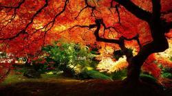Fall Tree Wallpaper