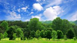 Enterprise Holdings 50 Million Tree Pledge