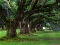 Recently on public radio there was an interview of an arborist about trees and how significant they are for all of life on earth.