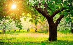 Fruit Trees Spring
