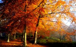 Autumn Trees HD wallpapers