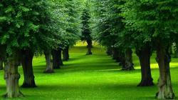 Beautiful Trees Background