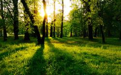 Nature Pictures Trees Hd 1080P 12 HD Wallpapers