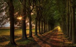 Trees Road Sunset