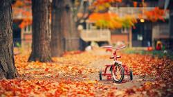 Tricycle Trees Fallen Leaves Autumn Photo