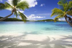 tropical-background