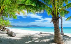Tropical beach under palms