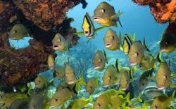 Tropical Fish Swarm
