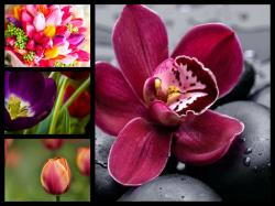 Flowers Tropical Flower Collage