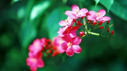 Hd Tropical Flowers Hd Background 9 HD Wallpapers